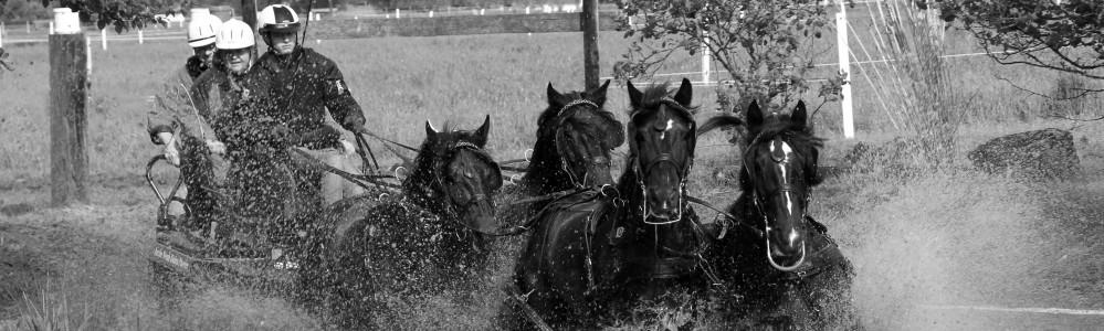 Arche Noah Dales Ponies